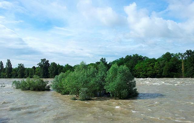bis zum Hals im Wasser ~ Bäume im alten Rhein