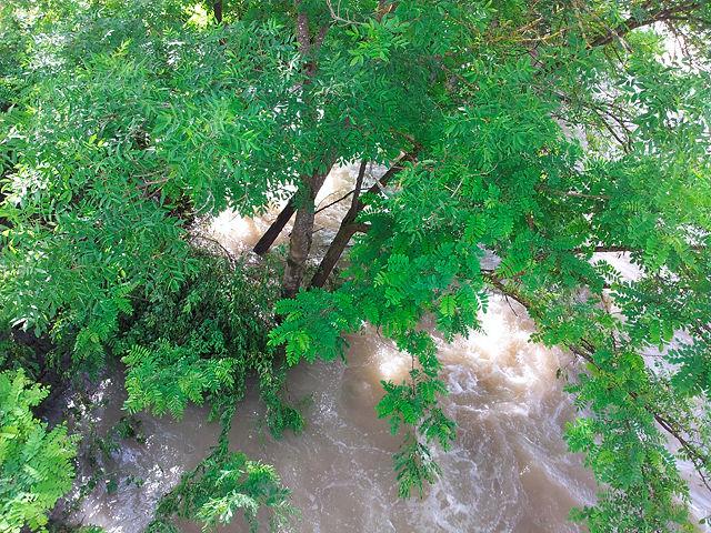 bis zum Hals im Wasser ~ Baum im alten Rhein von oben