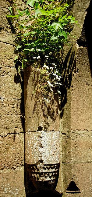 Burg Wildenberg ~ hierauf ruhte einst das Kreuzgewölbe des Torturms ~ jetzt mit Blumen bewachsen