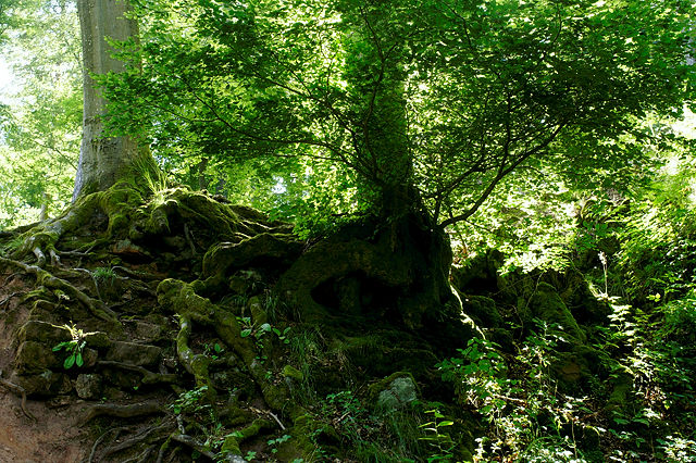 unterwegs im Zauberwald . . .