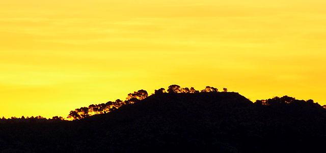 das heutige Morgebild ~ Silhouetten der Pinien auf dem Kamm gegenüber, kurz vor Sonnenaufgang