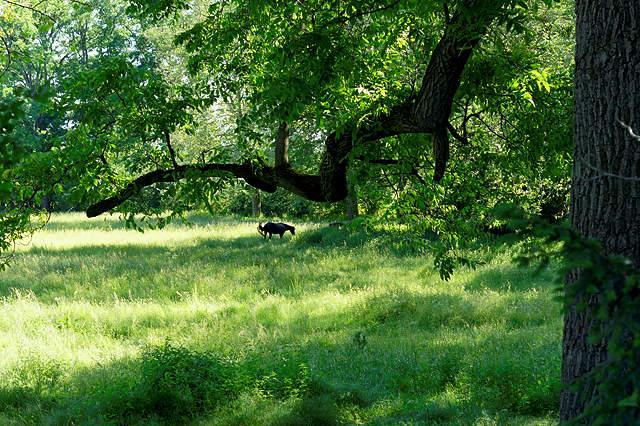 Sury Le Comptal ~ Blick in den Park des Château