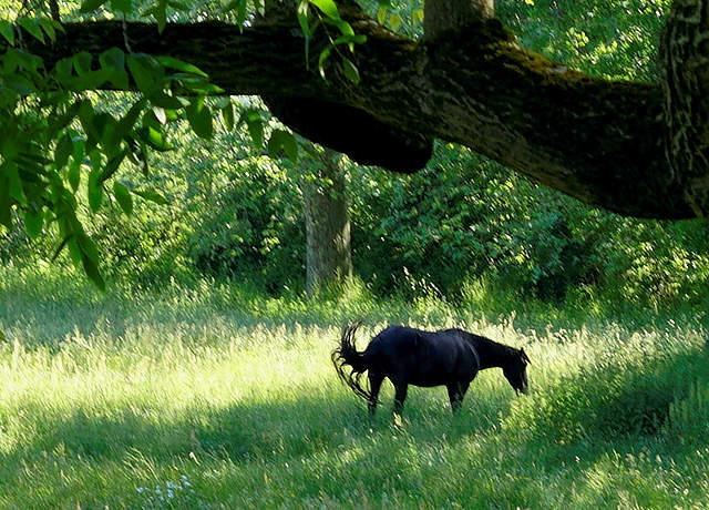 Sury Le Comptal ~ Blick in den Park des Château ~ mit Pferd