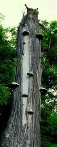 totes Holz im Kreislauf des Lebens