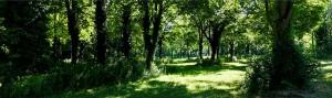 * Laubwald, von der Sonne durchflutet * durch Klick vergrößern