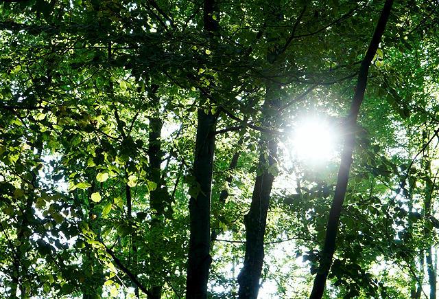 ein neuer Morgen ~ Sonne durchs Blätterdach