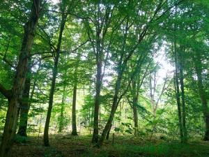 kühler im Wald