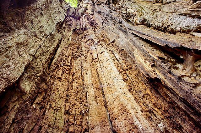 im Innern des hohlen Baums