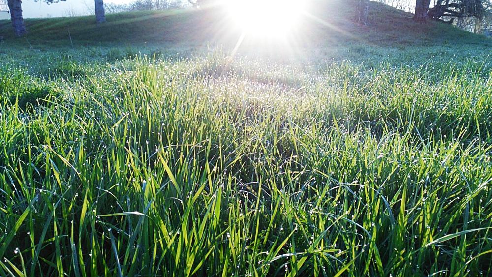 Tau funkelt im Gras