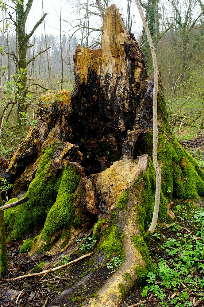 und dann noch ein Blitz ~ das hält der stärkste Baum nicht aus!
