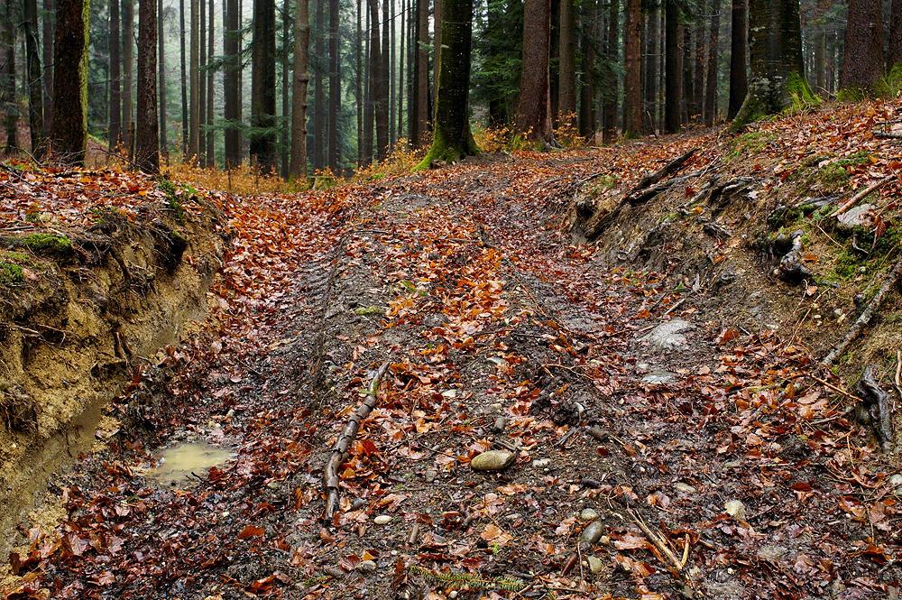 wenn der Zugang zum Wald so aussieht . . .
