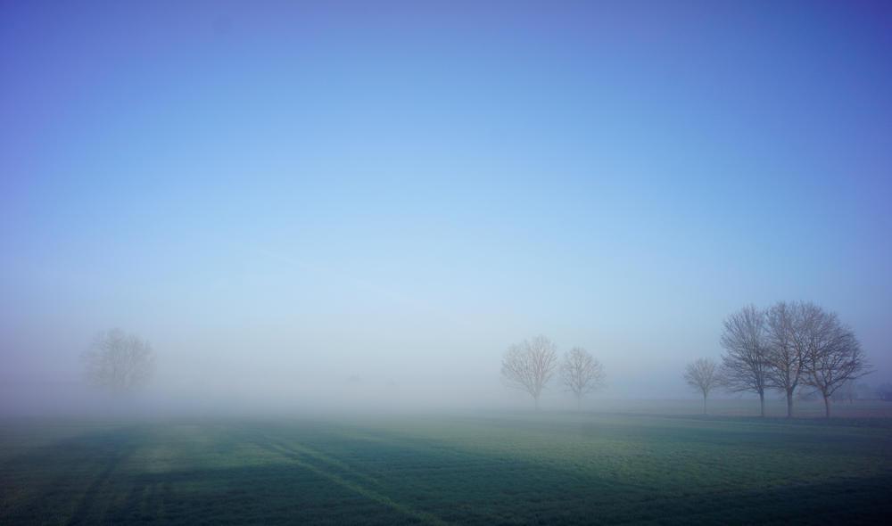 heute morgen kurz nach Sonnenaufgang ~ Blick über das angrenzende Feld
