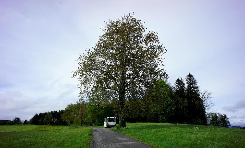 im Allgäu ~ ein schöner Platz am Waldrand mit Alpenblick