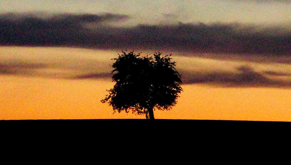 Silhouetten am Abendhimmel ~ Ausschnitt
