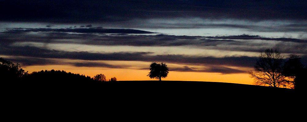 Silhouetten am Abendhimmel