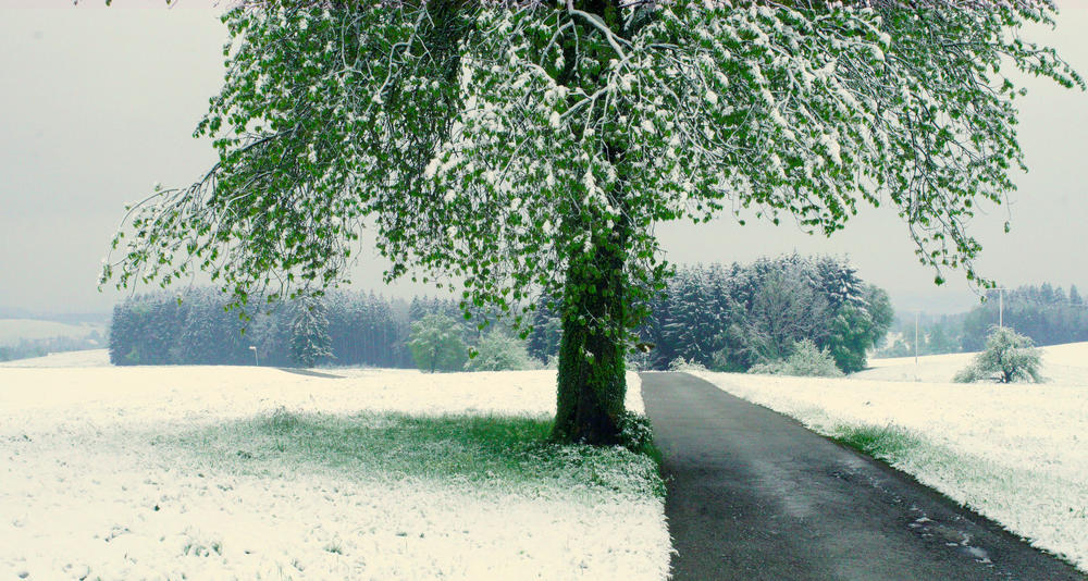 der Winter auf Stippvisite im Mai