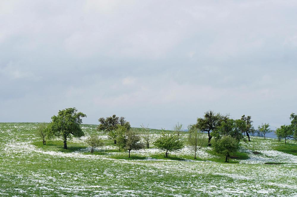 vom späten Schnee überraschtes Grün