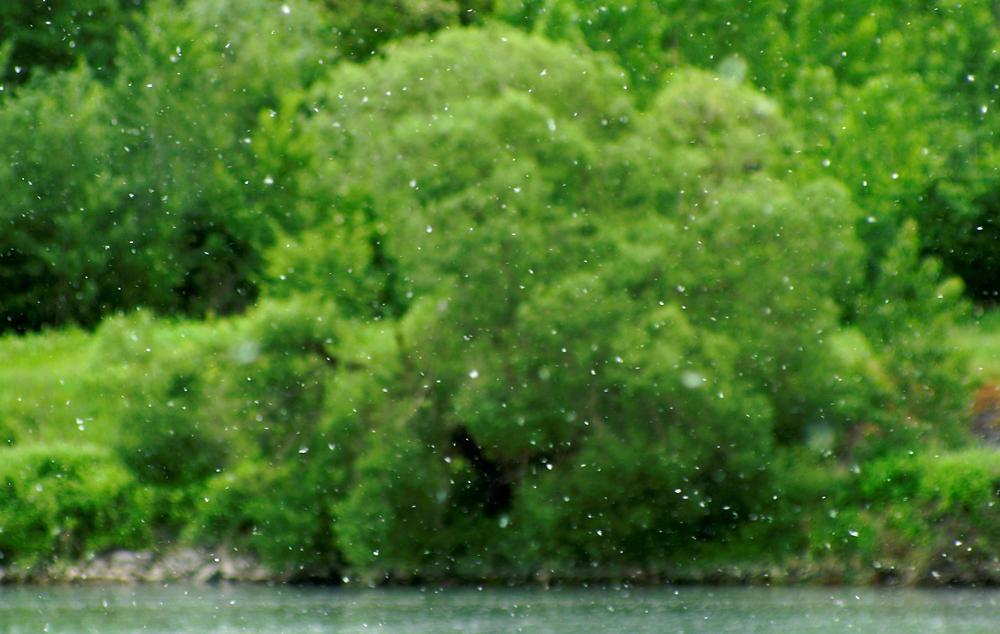 Weide am Ufer ~ Schärfe auf das 'Schneetreiben'