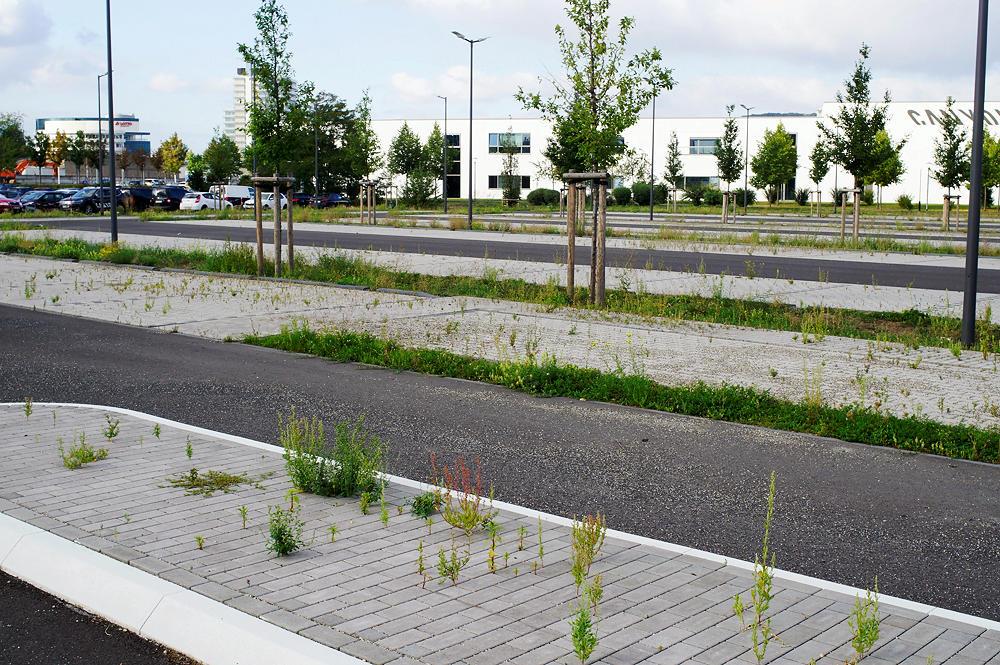 gehübschter Parkplatz ~ gesperrt zur (Un-)Krautzucht, nachts mit Beleuchtung