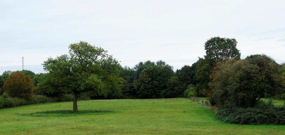 Grün, Wiese und Mischwald