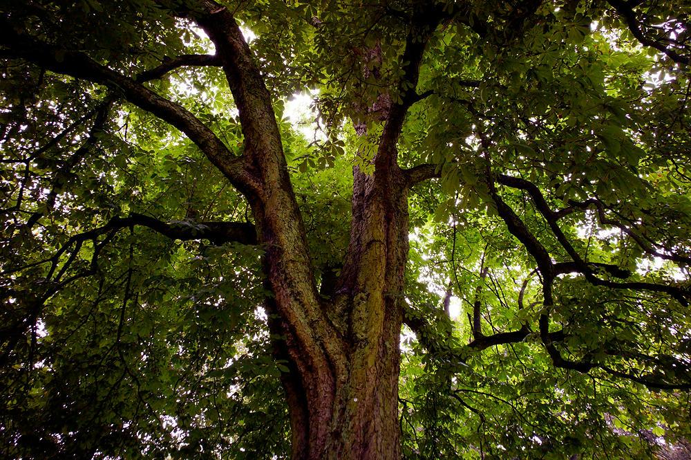 Villa Hügel ~ Park mit altem Baumbestand