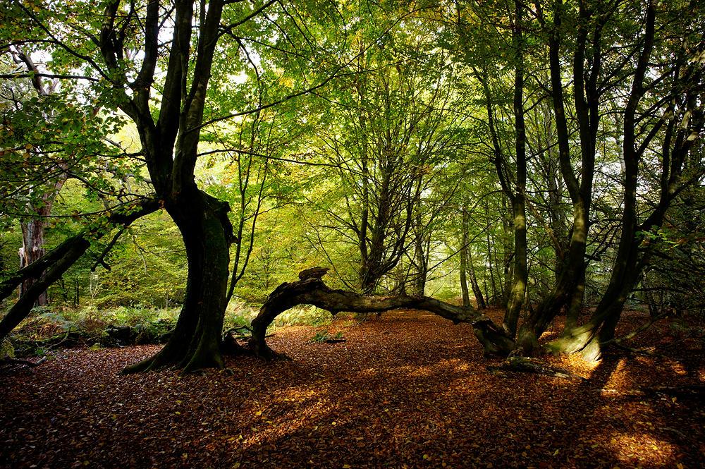 Urwald Sababurg im beginnenden Herbst