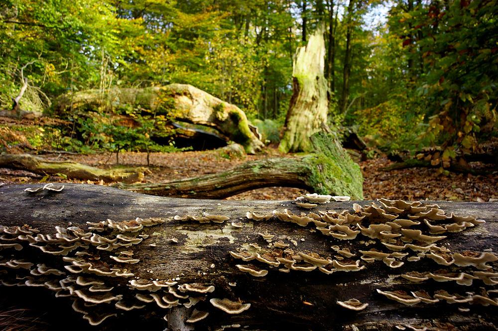 Pilze am Werk ~ Verwertung im ewigen Kreislauf