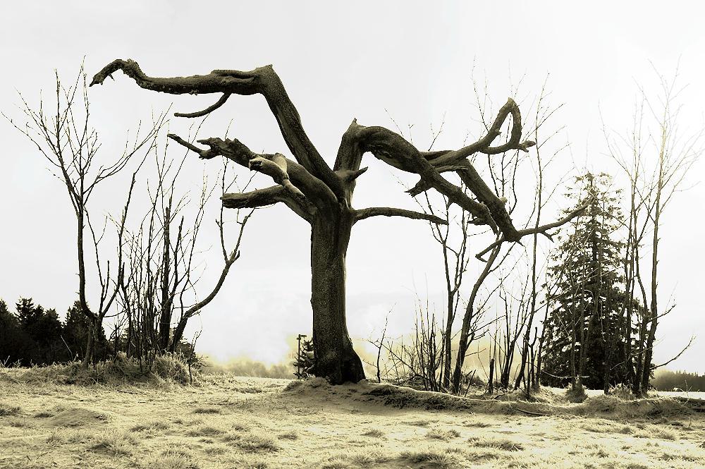 baumisch im Winter
