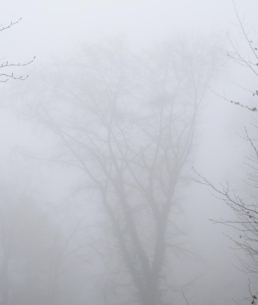 Nebel im Außen, Nebel im öffentlichen Leben