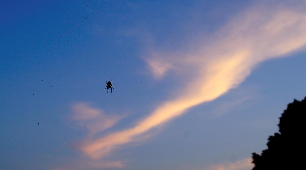 Spinne vor dem Himmel