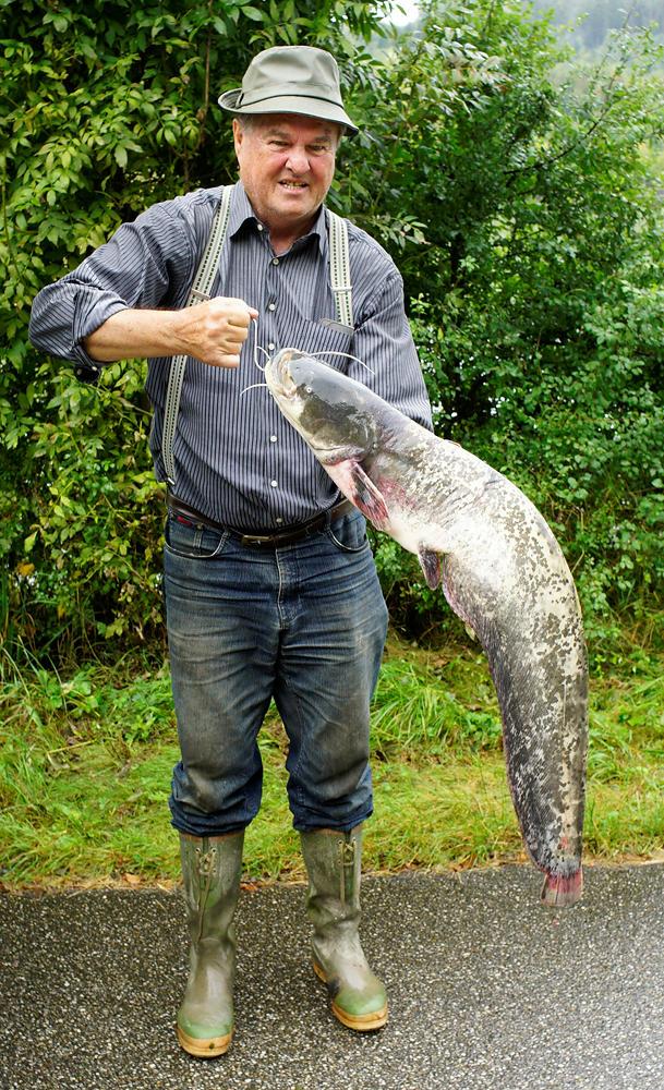 Anglers Glück, mit gefangenem Wels