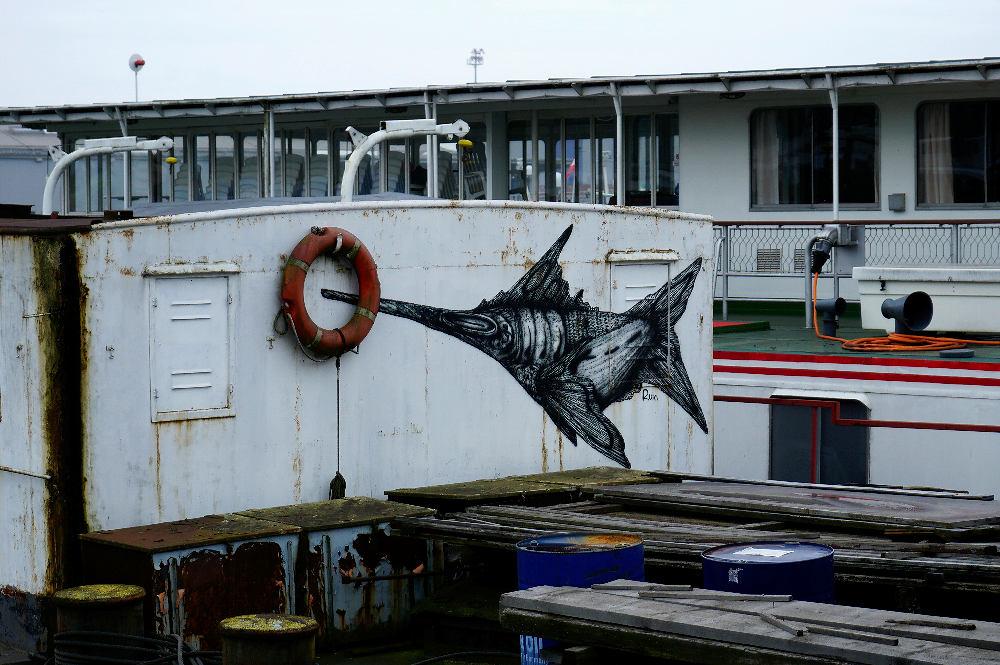 Schwertfisch in der Donau!