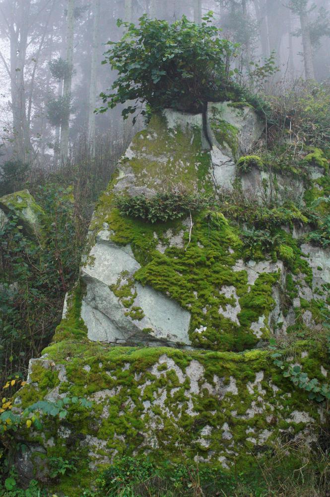 Felsen und Moos ~ und Nebel