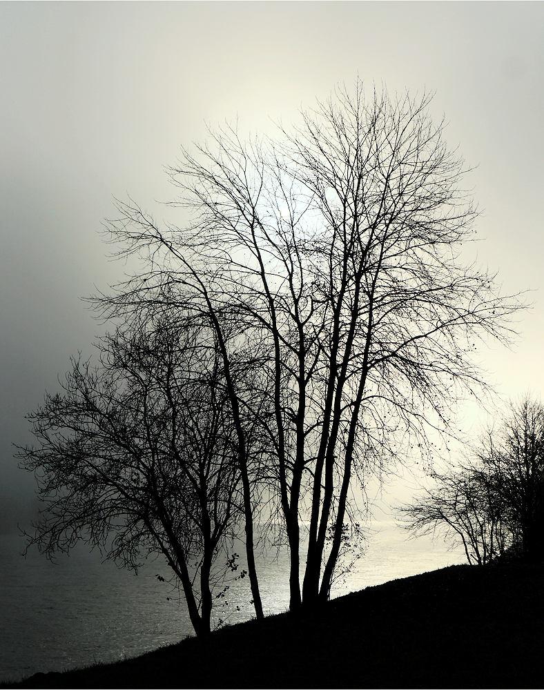 fast, aber nicht ganz schwarzweiß ~ die Sonne steigt aus dem Nebel über der Donau