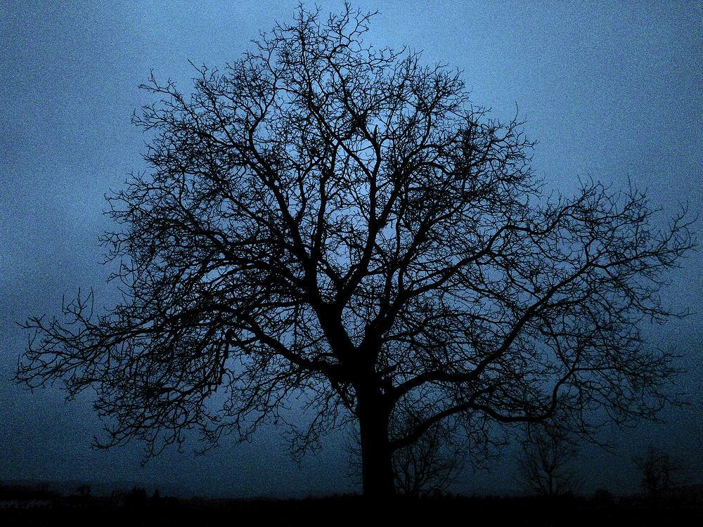 ohne Blätter in der Nacht