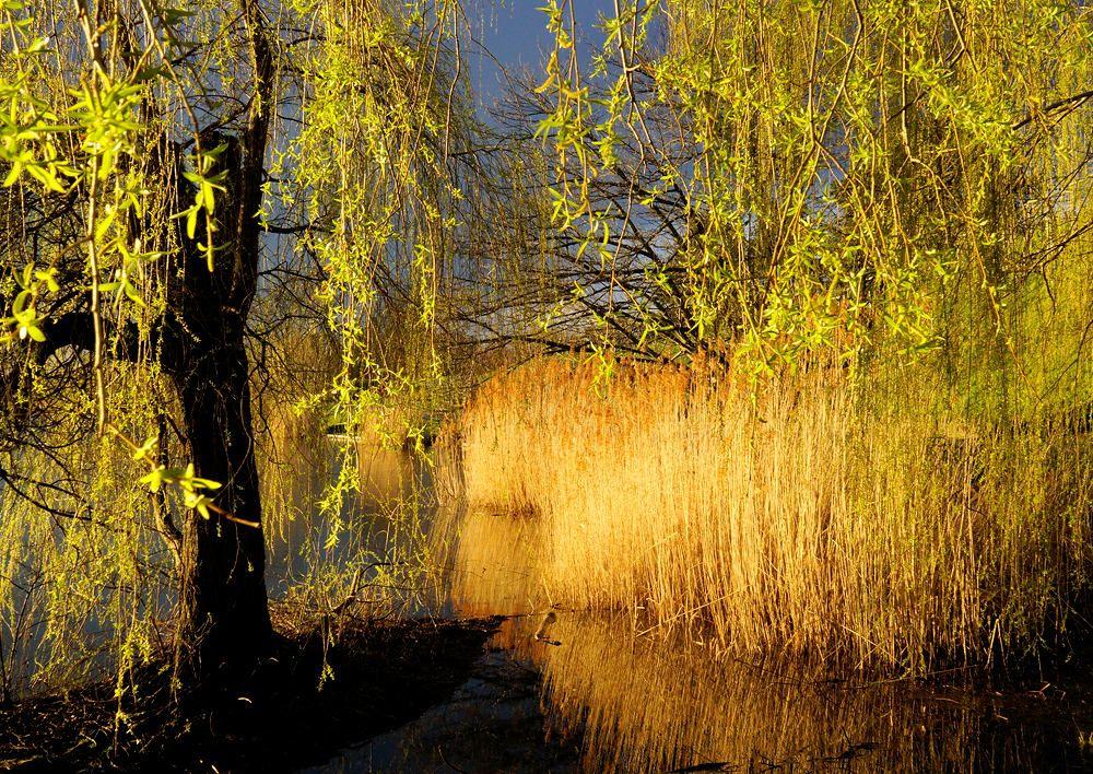 goldenes Abendlicht