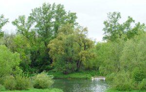 Frühlingsidyll am Rhein